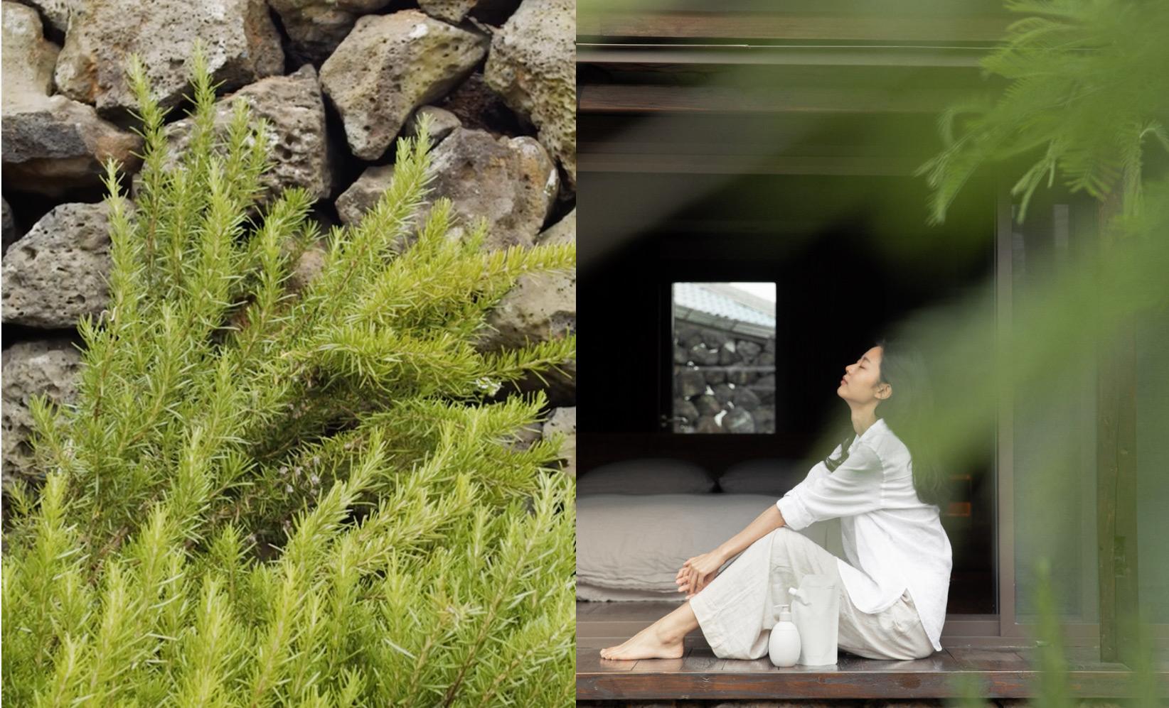 이니스프리-리스테이-강한 생명력의 Jeju Herbal Complex™가 전달하는 피부 휴식