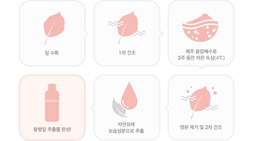 이니스프리-제주 왕벚꽃 라인